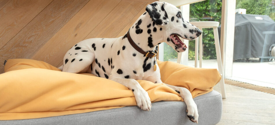 dálmata en una cama topology para perro con funda puf