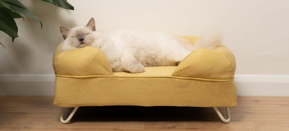 gato ragdoll durmiendo en una cama viscoelástica amarilla para gato