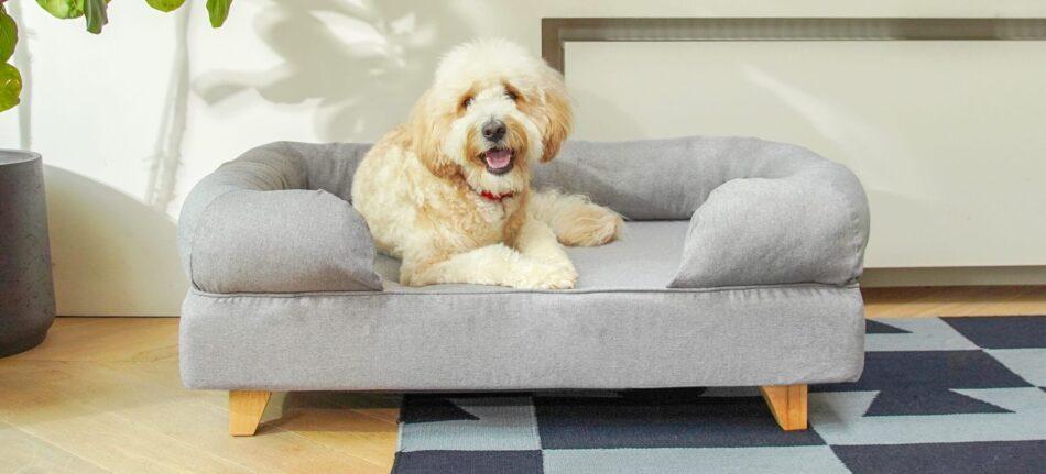 goldendoodle descansando en una cama viscoelástica gris